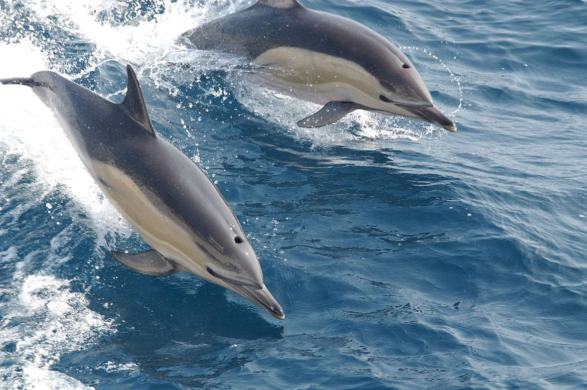 Cascais Dolphin Watching Tours